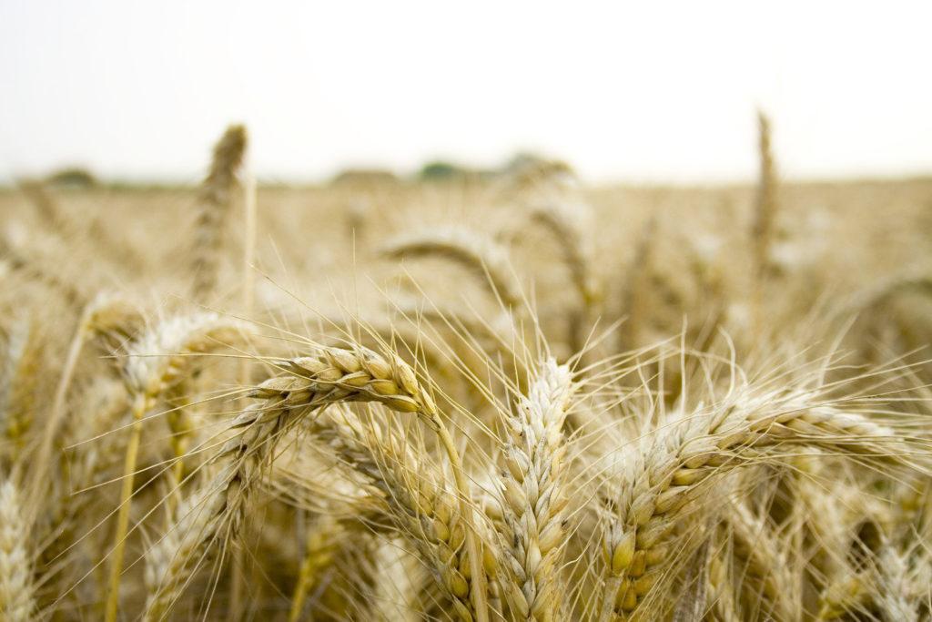 artikkeli-maataloustiede